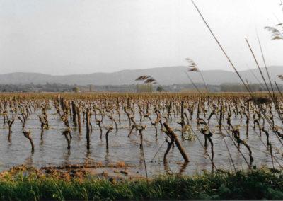 Submersion hivernale des vignobles de l'étang de Marseillette
